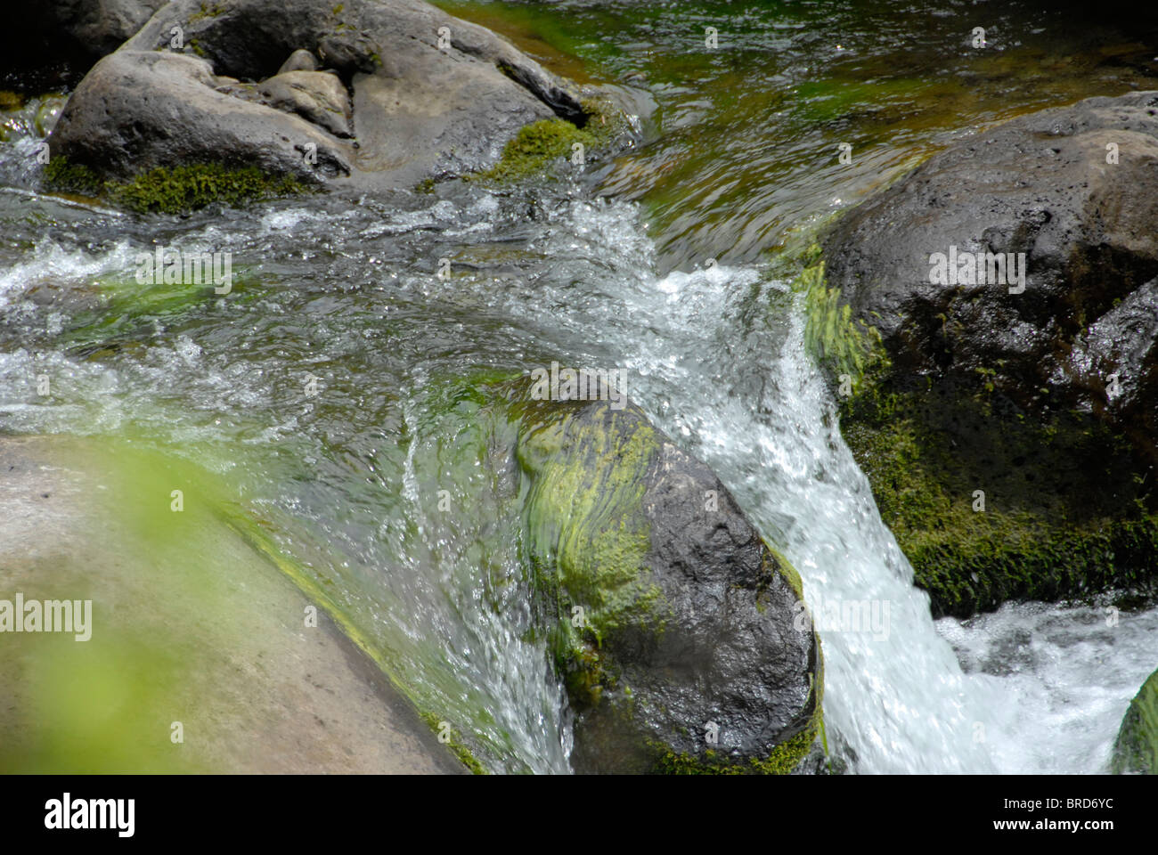 A babbling brook in Hawaii with swift , clear water flowing over and around moss-covered stones. Photo taken with - Stock Image