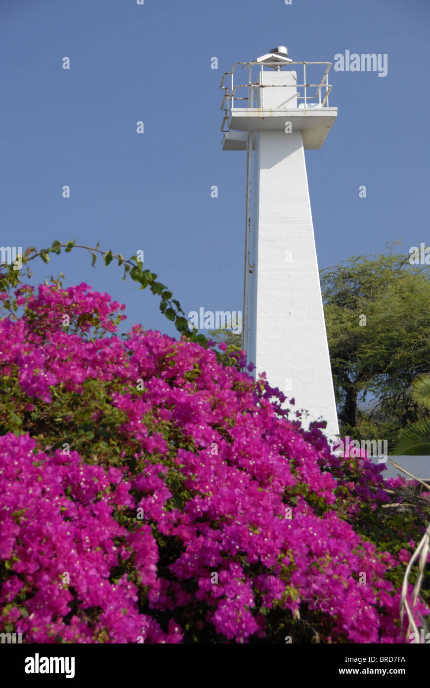 Lighthouse and flowers in LaHaina, Hawaii. Photo taken with Nikon D200 camera. - Stock Image