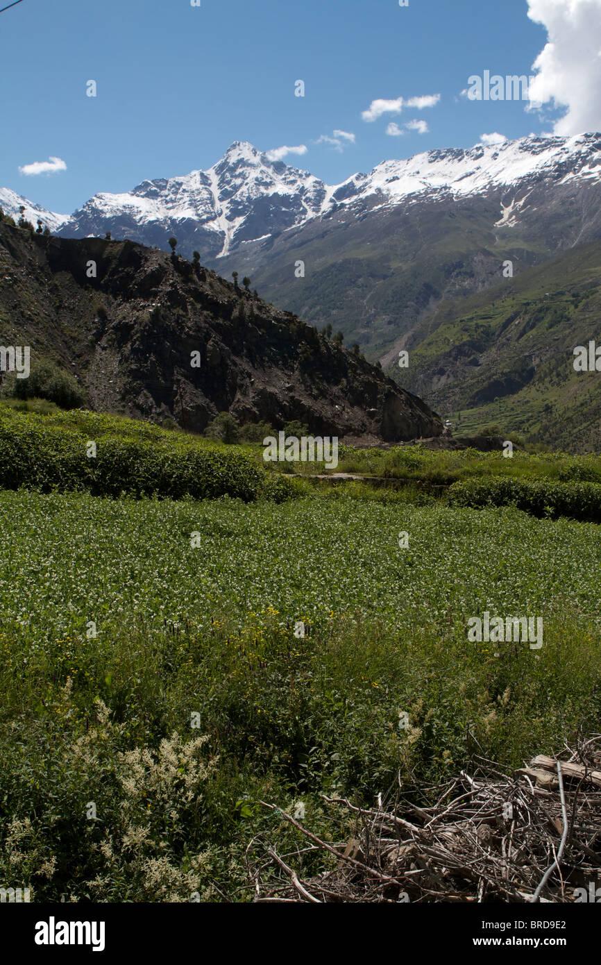 mountain in keylong - Stock Image