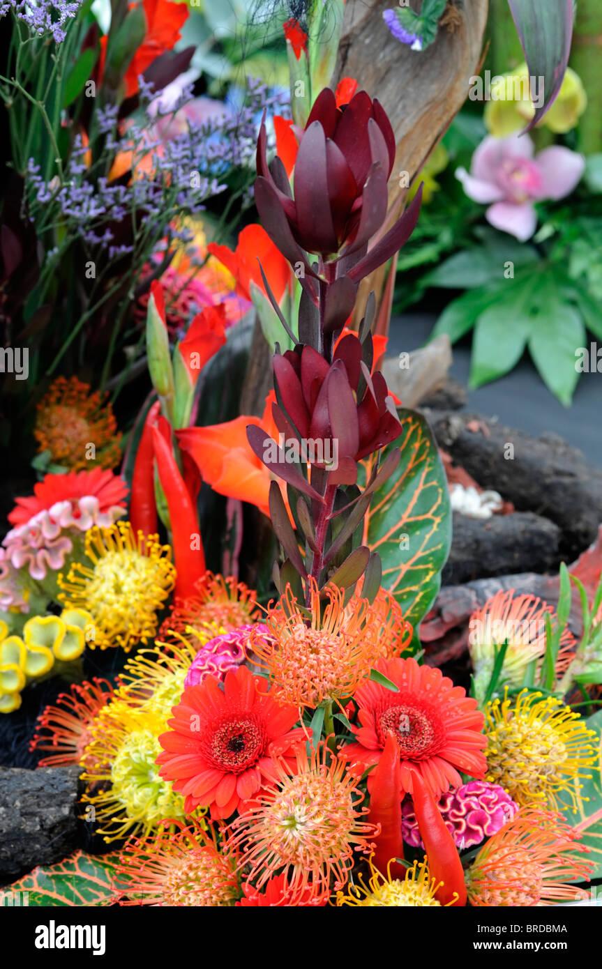 Red Orange Yellow Flower Display Arrange Arrangement Fire Fiery