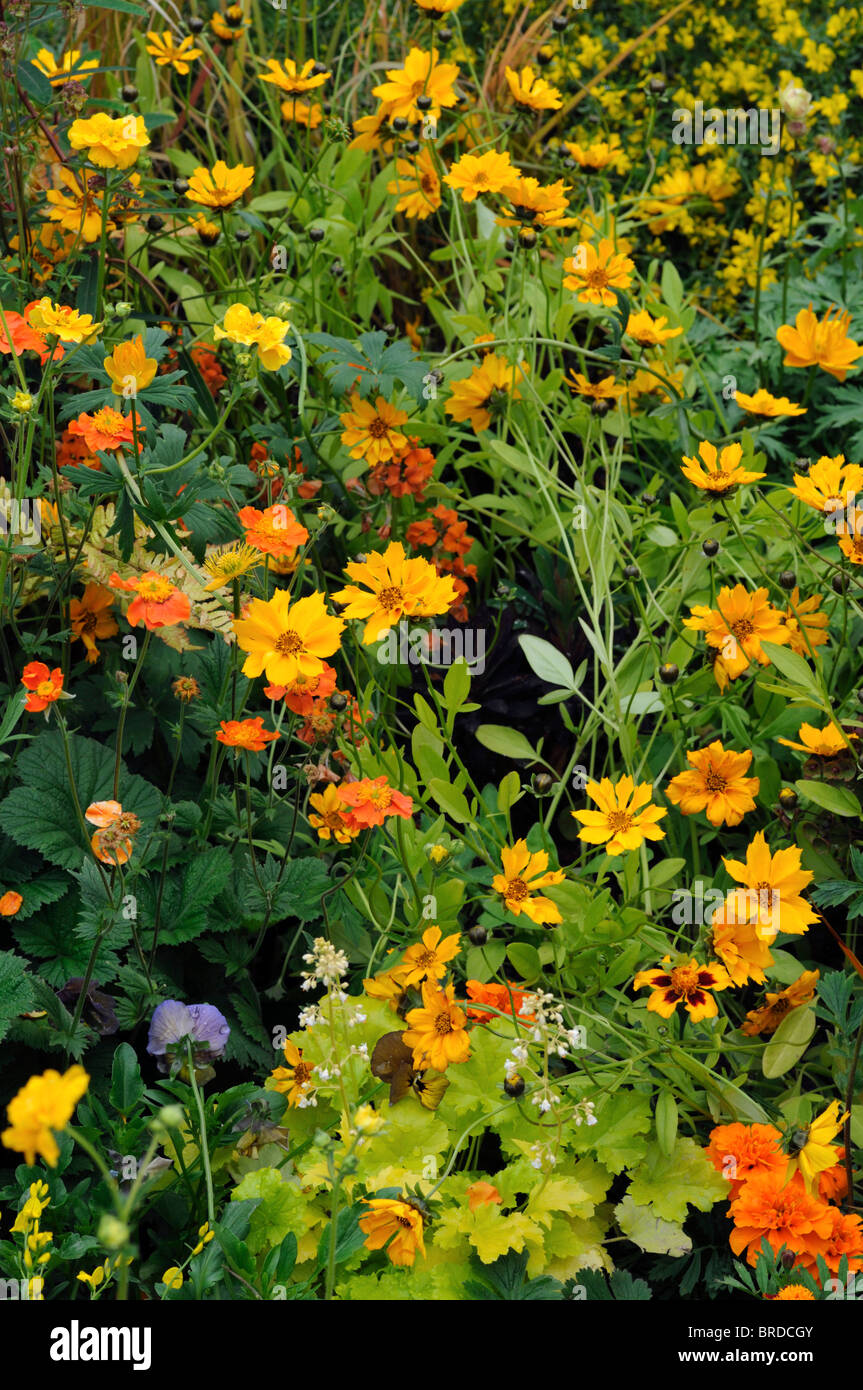 Mixed perennial flower bed multi multiple color colors yellow orange mixed perennial flower bed multi multiple color colors yellow orange white summer heliopsis coreopsis mightylinksfo