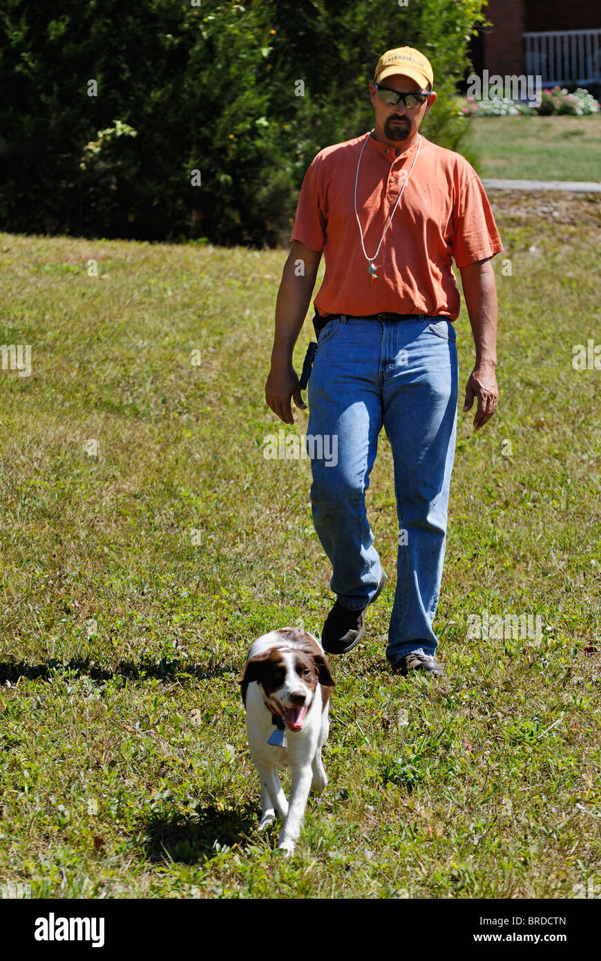 Dog Trainer Walking through Field with Brittany in Harrison County, Indiana - Stock Image