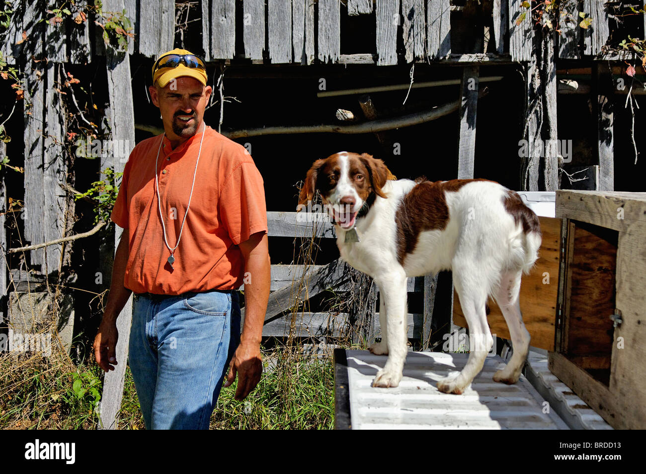 Dog Trainer with Brittany on Tailgate of Truck in Front of Old Barn in Harrison County, Indiana - Stock Image
