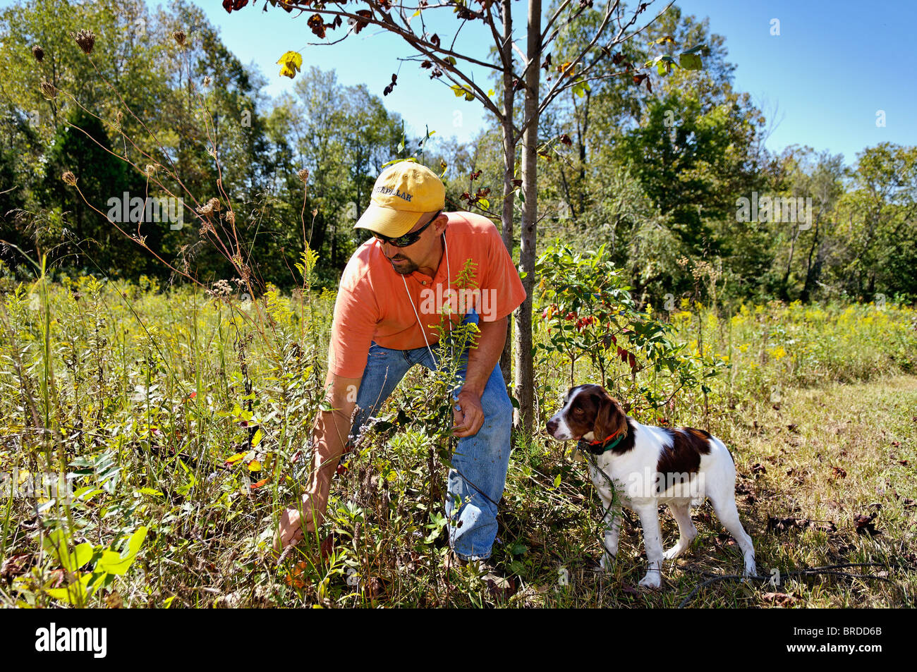 Dog Trainer Working with Brittany in Harrison County, Indiana - Stock Image
