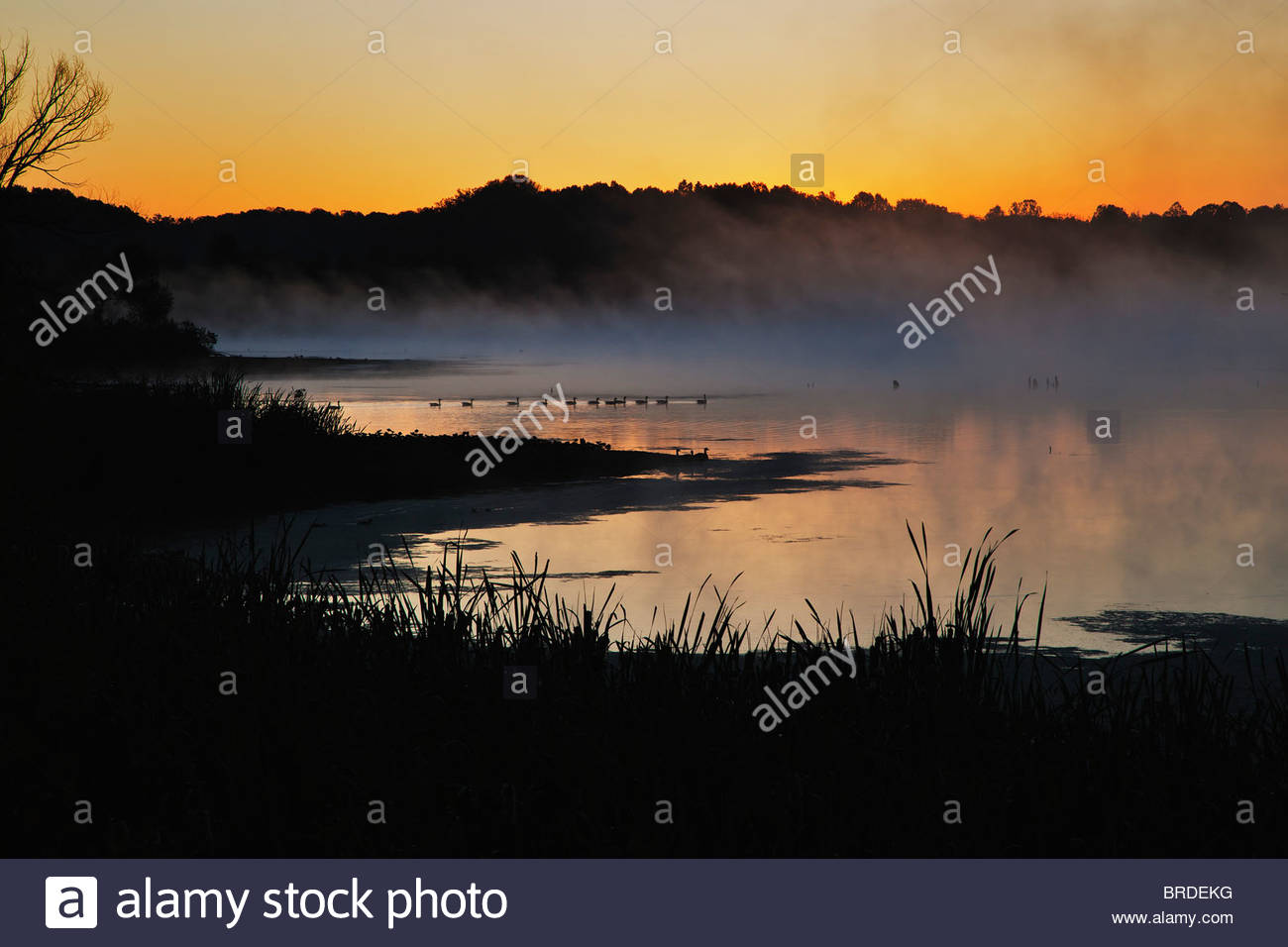 Sunrise over marsh with geese and fog - Stock Image
