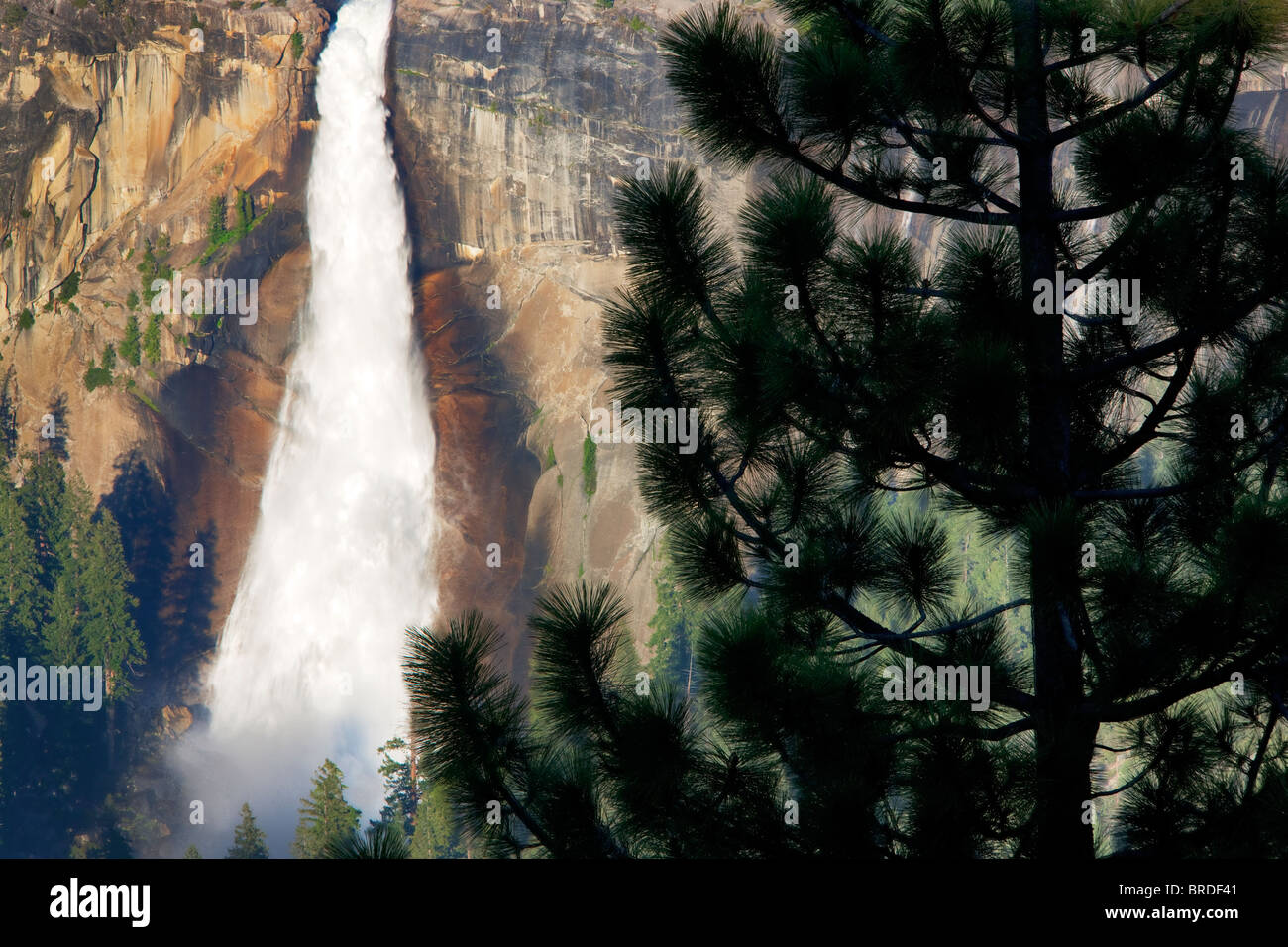 Nevada falls and pine tree as seen from Glacier Point. Yosemite National Park, California - Stock Image