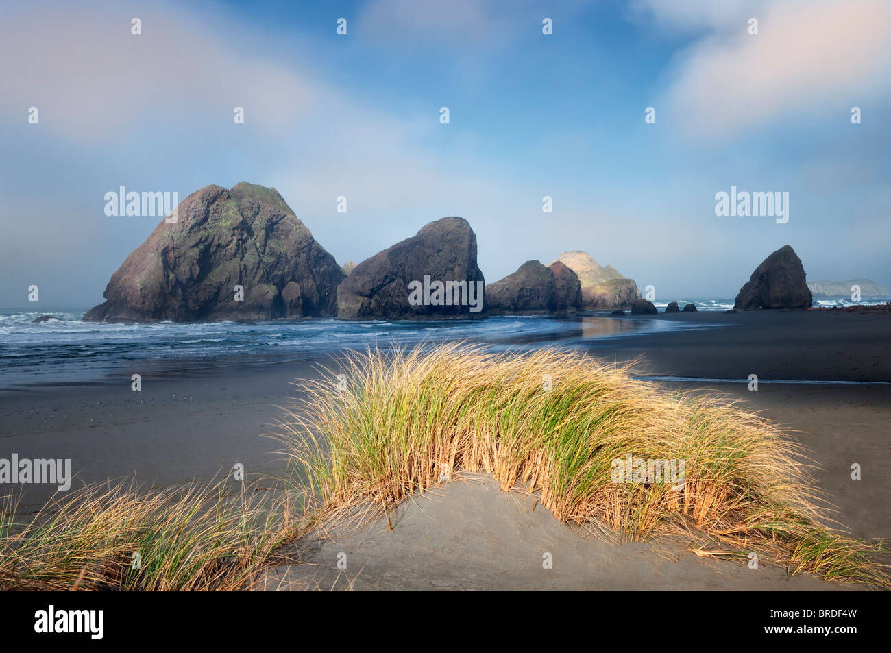 Fog and dune grass at Cape Sabastian. Oregon - Stock Image