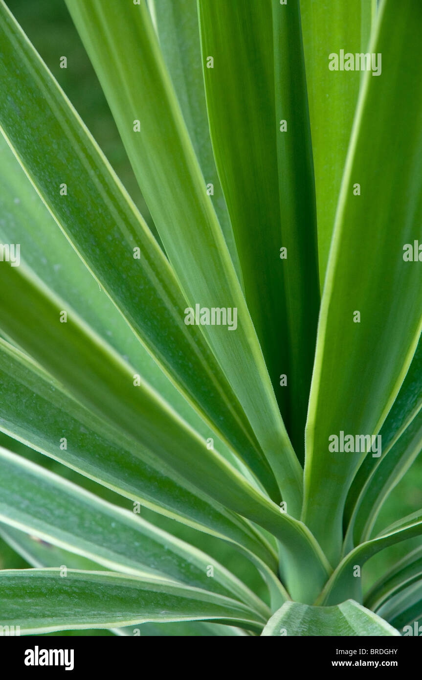 Green plant detail background, selective focus - Stock Image