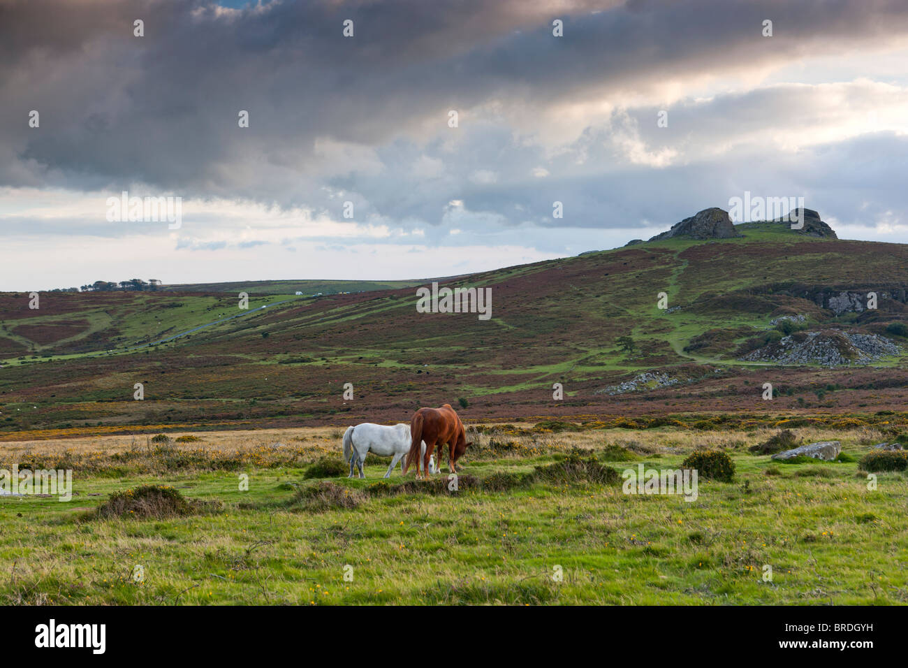 Last daylights over Haytor Rocks and Haytor Down. Dartmoor National Park. - Stock Image