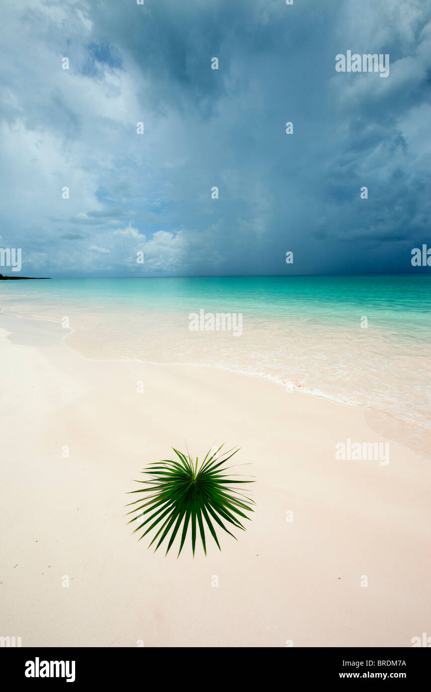 palm leaf on deserted beach - Stock Image