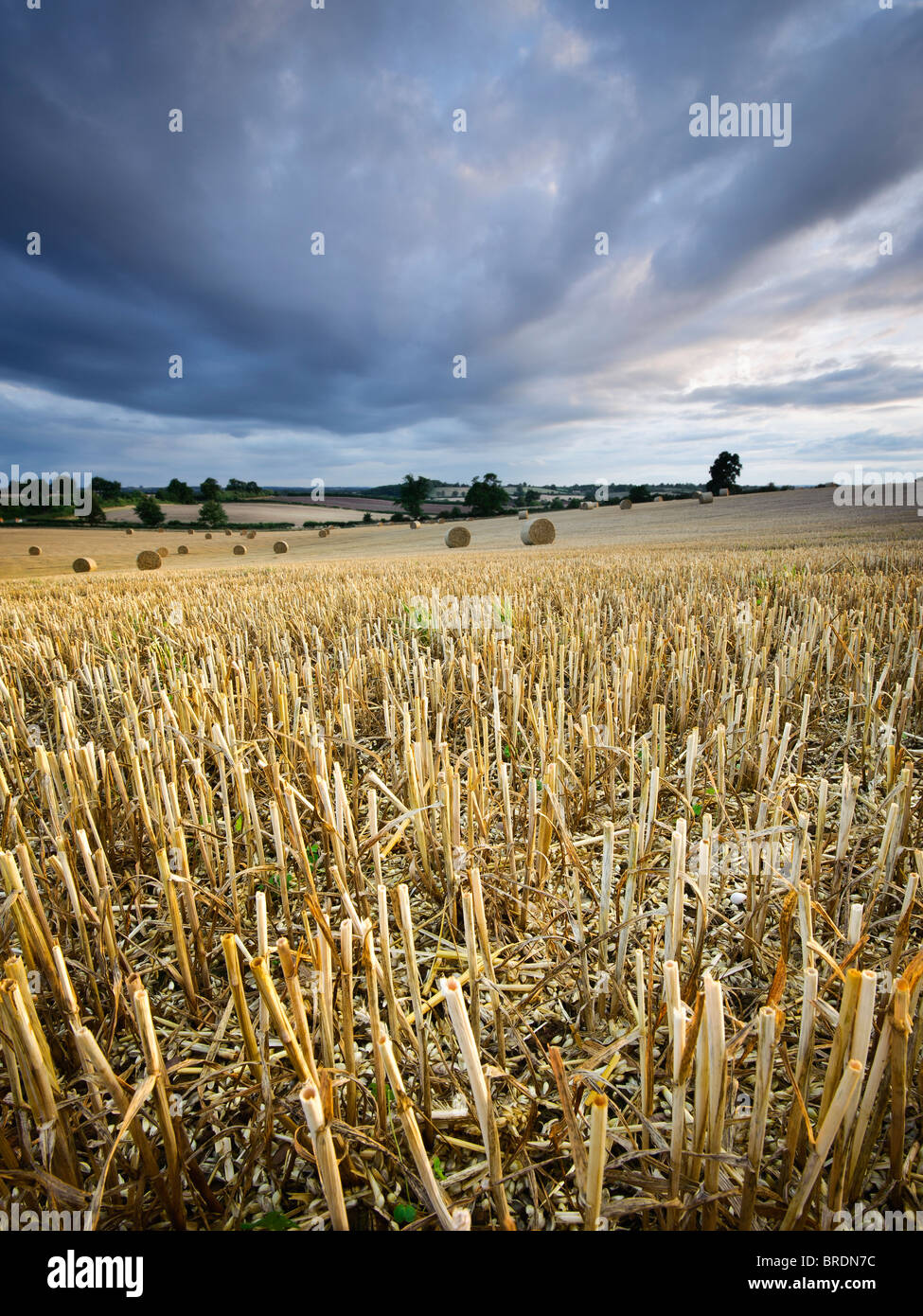 Hay bails and stubble in a field at sunset, Warwickshire, England, UK - Stock Image