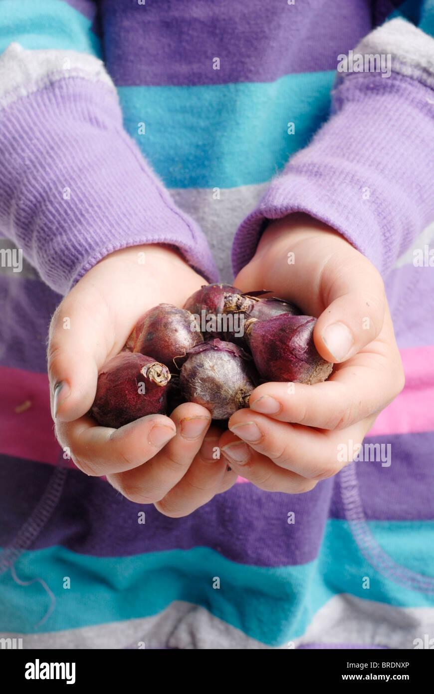Little child holding flower bulbs (scilla siberica) Stock Photo