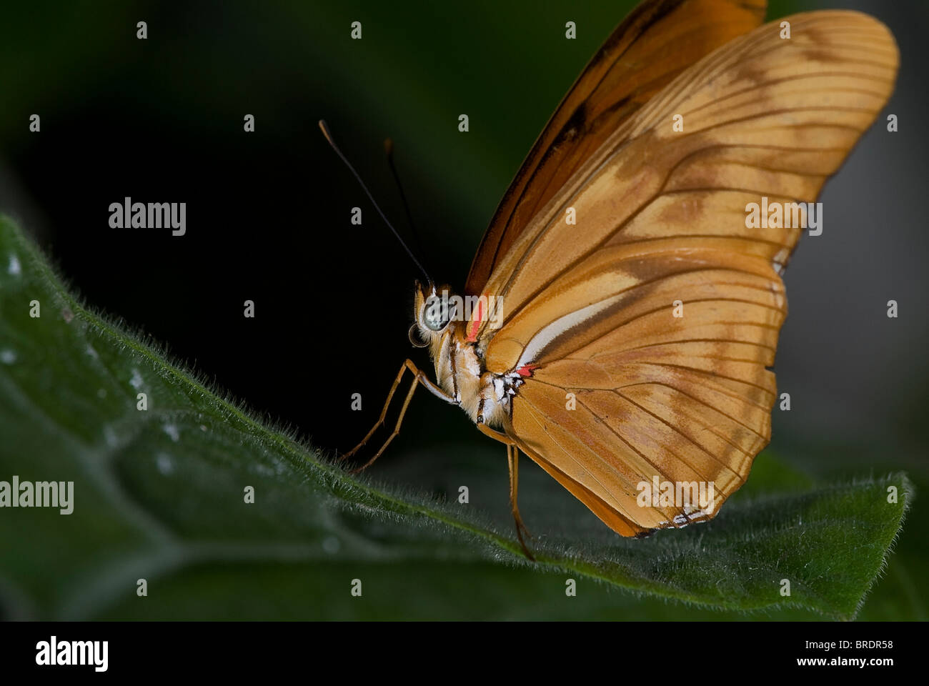 Butterfly Garden United States Stock Photos & Butterfly Garden ...