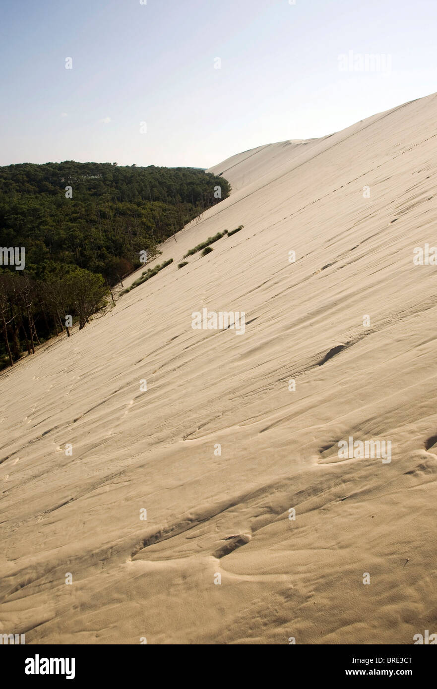 Pine forest at the dune of Pyla, Dune du Pilat, biggest dune in Europe on the Atlantic coast near Arcachon, Departement - Stock Image