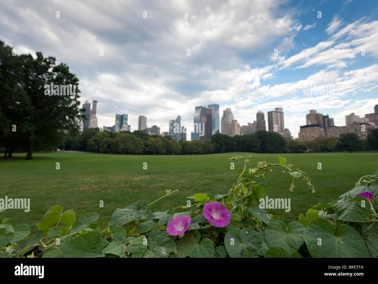 Sheep's head meadow in front of Central Park South with morning glories in foreground - Stock Image