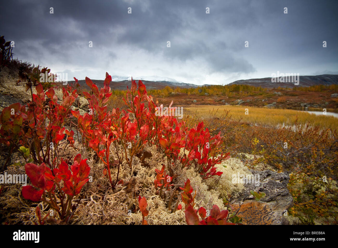 Beautiful fall colors at Strynefjellet, Norway. - Stock Image