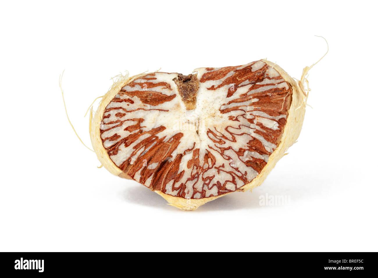 betel nut on a white background - Stock Image