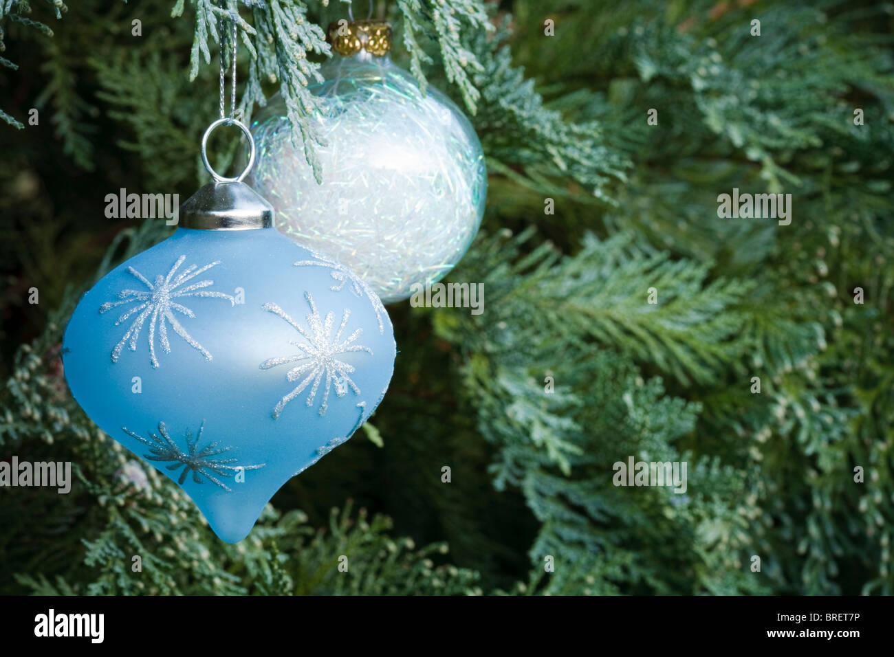 Christmas decorations hanging in an evergreen tree - Stock Image