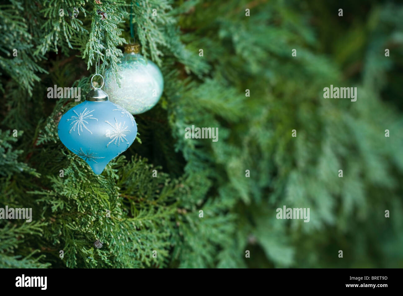 Christmas decorations hanging in a real christmas tree with lots of copy space - Stock Image
