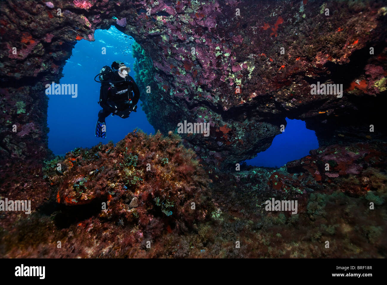Scuba diver diving through a cave overcrusted with invertebrates, Cyprus, Asia, Mediterranean Sea - Stock Image