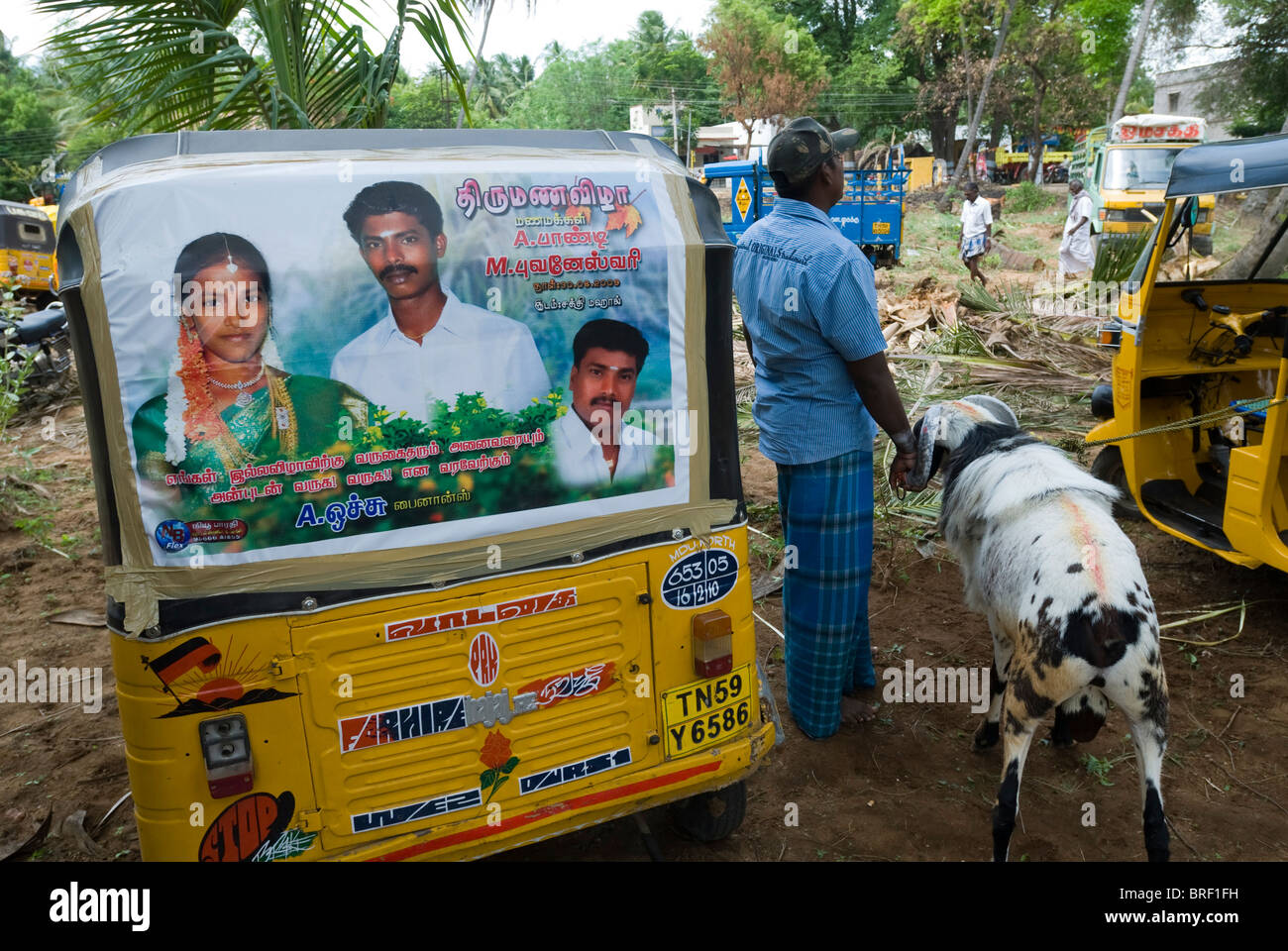 Goat Fighting Conducted Part Temple Stock Photos & Goat ...