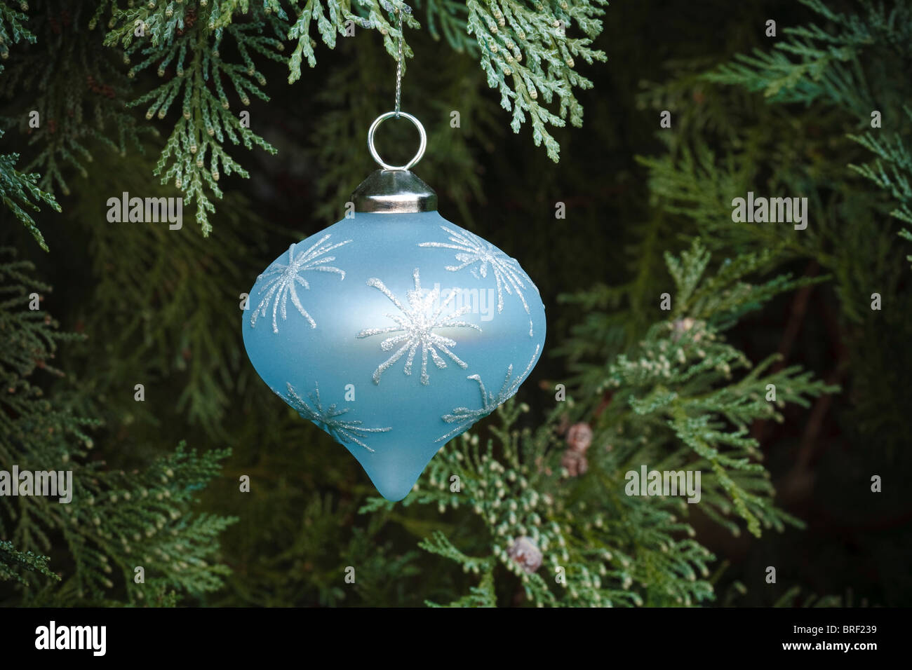 Closeup of a christmas decoration hanging in a real christmas tree - Stock Image