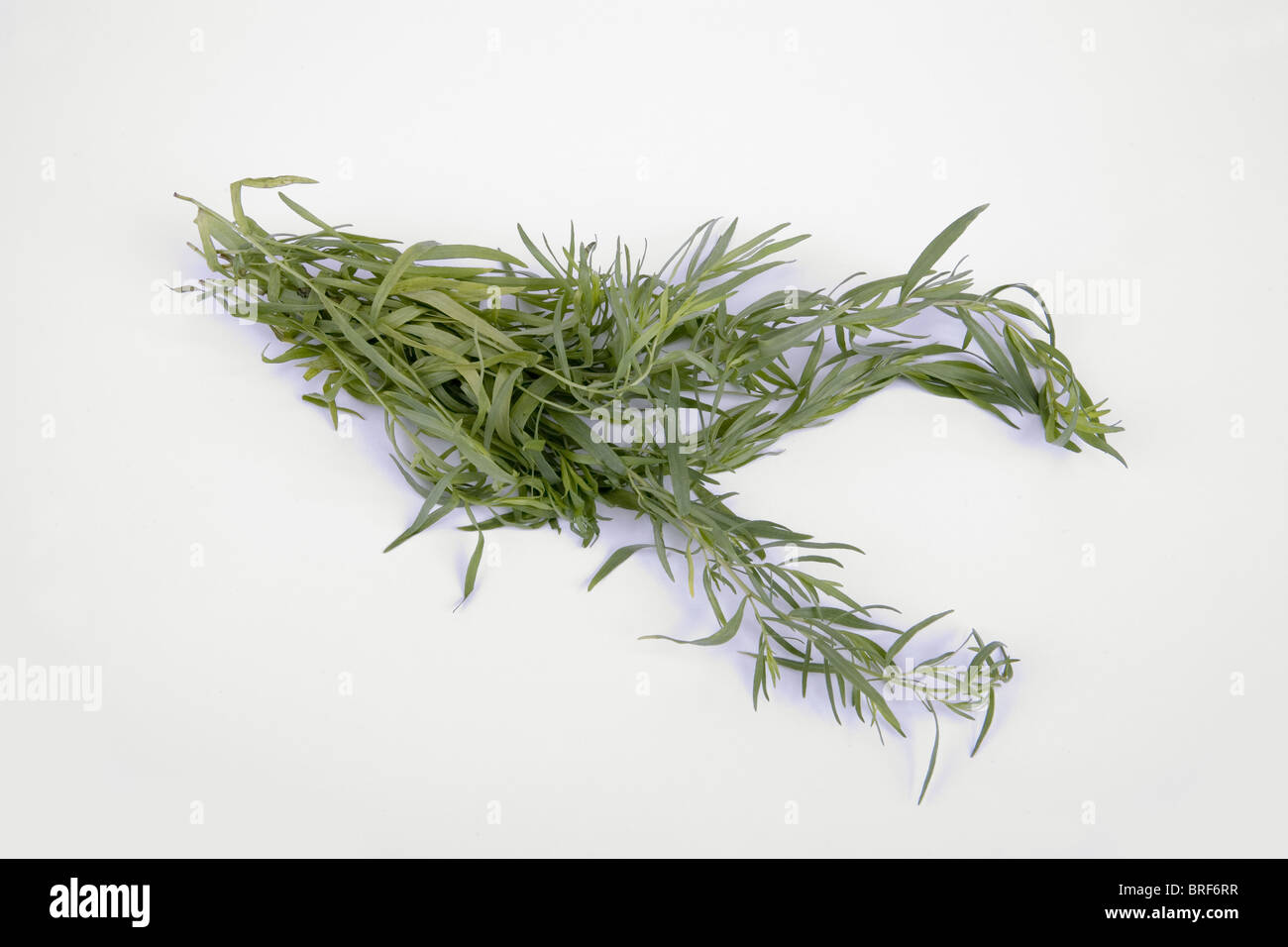Tarragon on white background, close-up - Stock Image