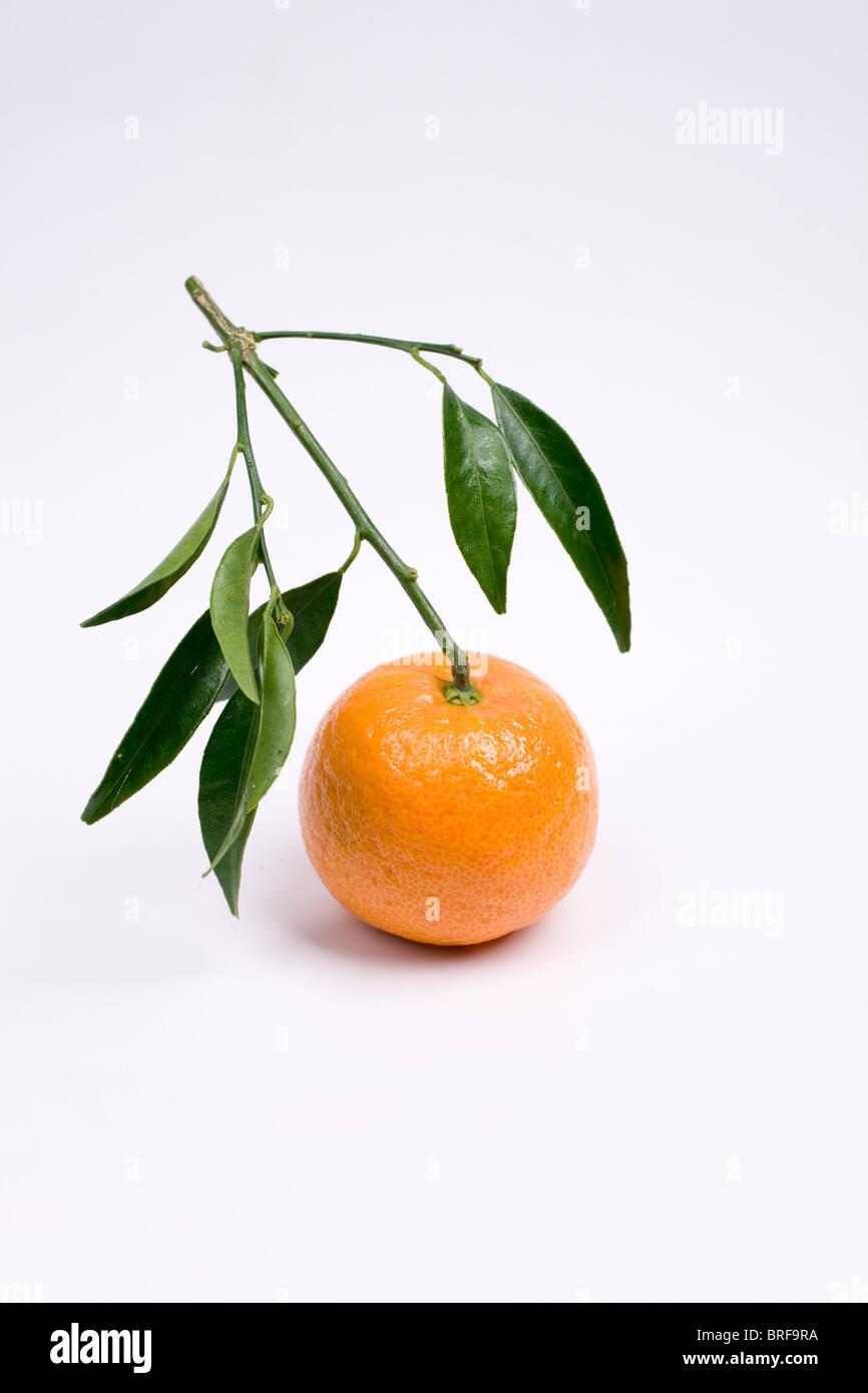 Mandarin with stalk on white background, close-up - Stock Image