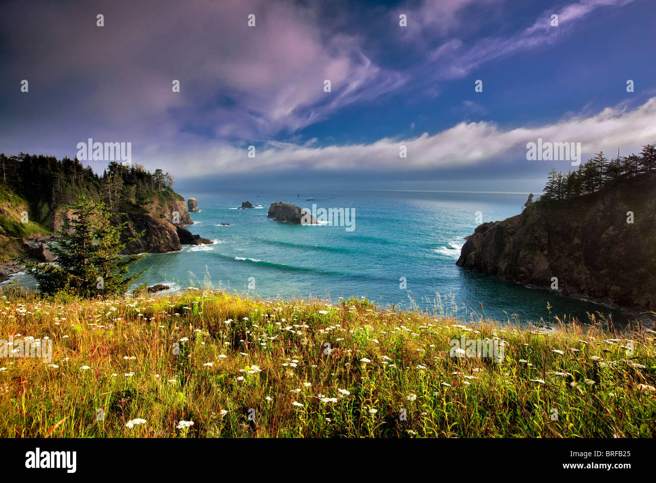 Wildflowers and cove. Samuel H. Boardman State Scenic Corridor. Oregon - Stock Image