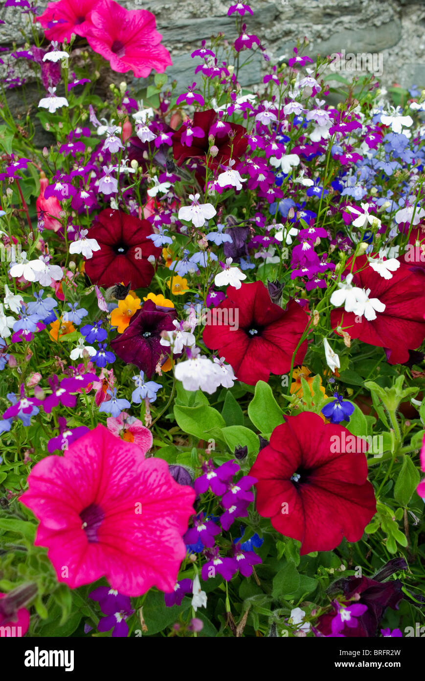 A massive array of colorful flowers in a window box - Stock Image