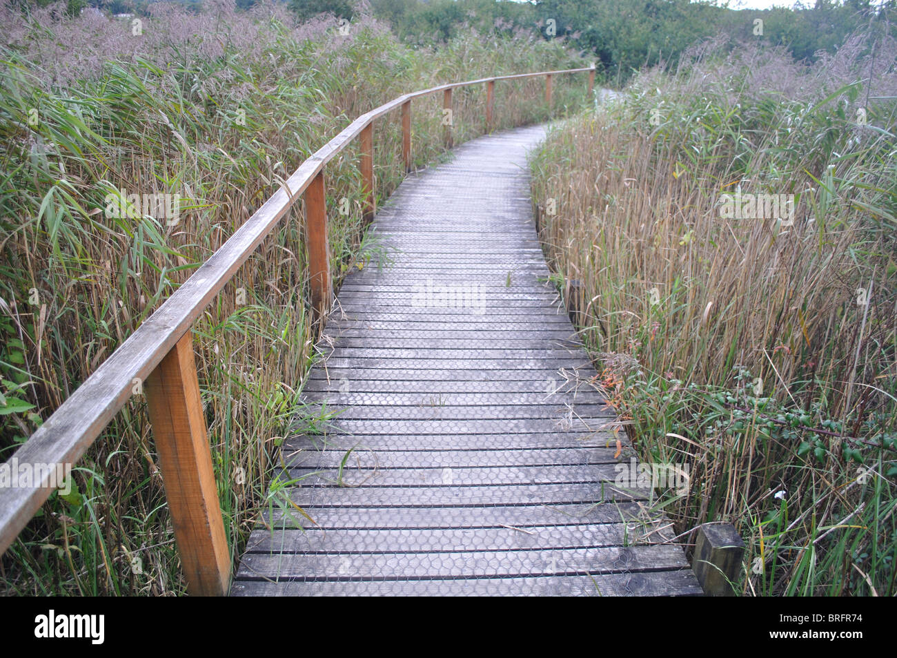 Boardwalk path through River Teifi Marshes nature reserve, pembrokeshire, wales, united kingdom Stock Photo