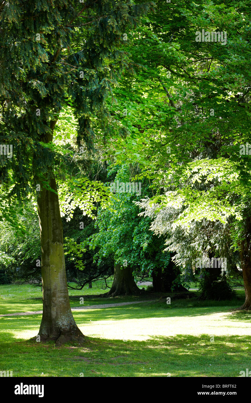 lush green leafy trees - Stock Image
