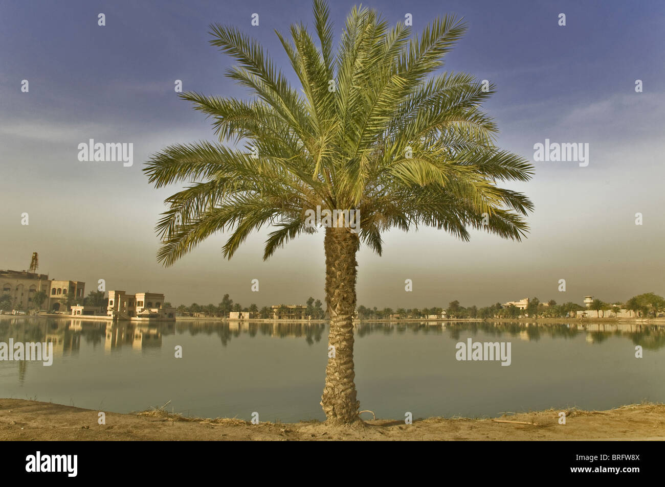 A Palm tree in the Middle East standing before a small body of water. A man made lake in Baghdad, Iraq near Saddam's - Stock Image