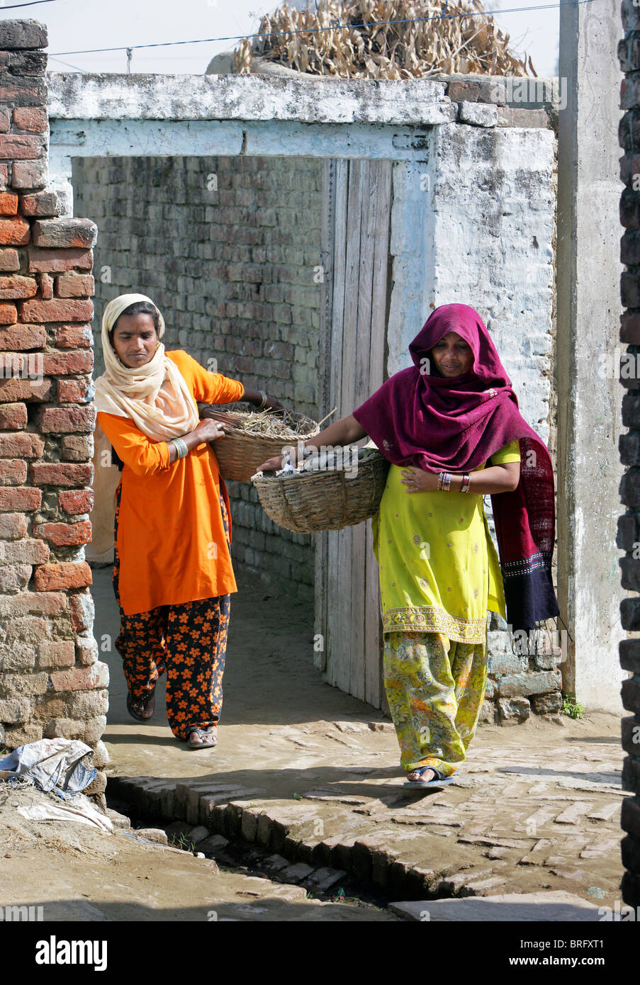 Dalit women from the cast of the untouchables working as scavangers, cleaning human excrements. Uttar Pradesh, India - Stock Image