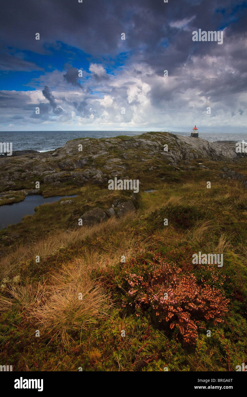 Heather and fall colors at the island Runde on the Atlantic west coast of Norway. - Stock Image