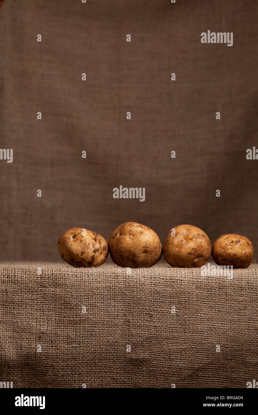 Potatoes Resting on farmer's Hessian (burlap) - Stock Image