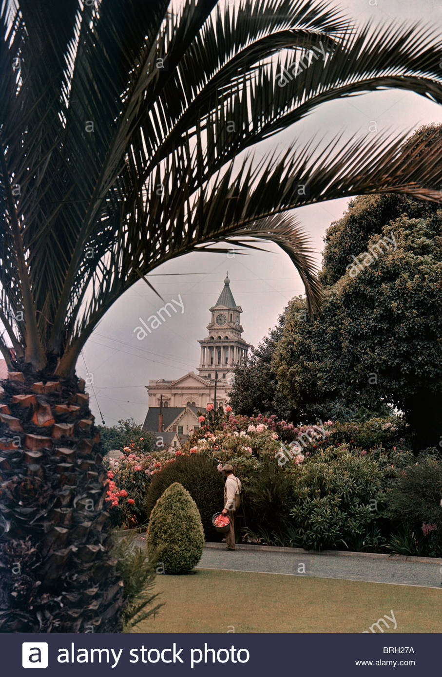 The Eureka Courthouse, framed by date palms and rhododendrons. - Stock Image