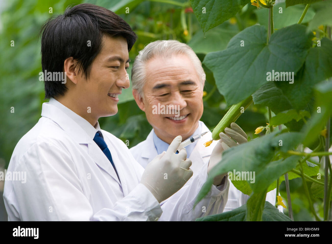 Scientists doing research in modern farm - Stock Image