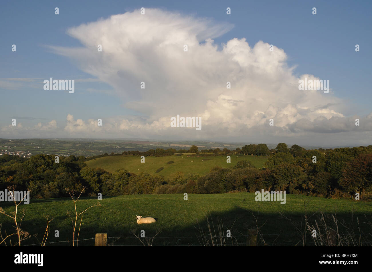 Anvil cumulonimbus cloud over sheep in field, pembrokeshire, wales, united kingdom - Stock Image
