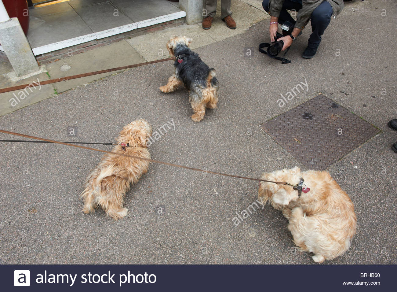 Dogs on leads being photographed - Stock Image