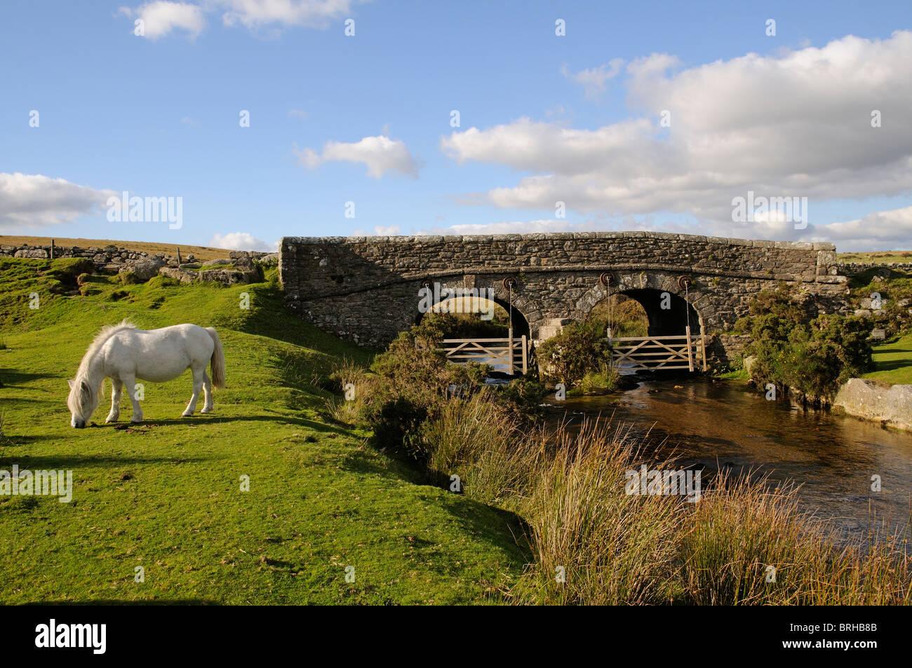 Dartmoor ponies grazing on the moor Dartmoor National Park Devon England UK West Dart River - Stock Image
