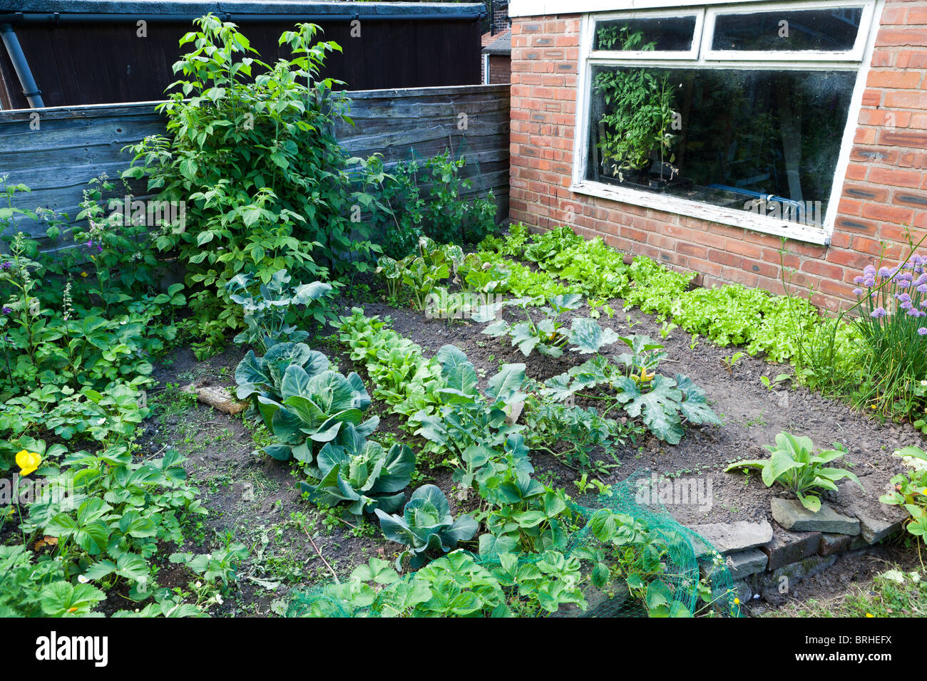 Vegetable patch in a back garden - Stock Image