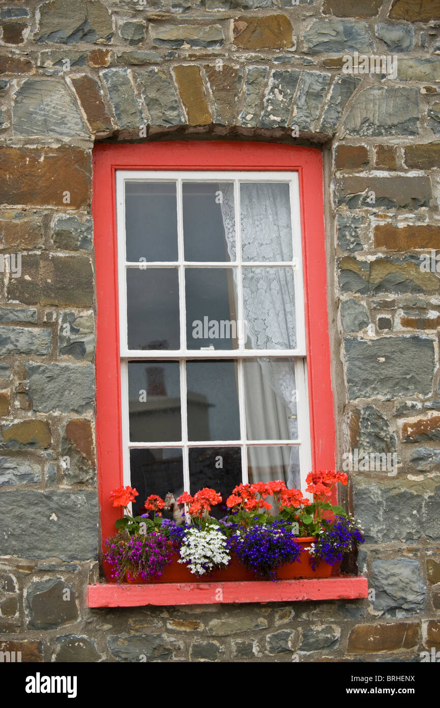 Sash window with flower box on sill outside house in the coastal resort of New Quay, Ceredigion, West Wales, UK - Stock Image