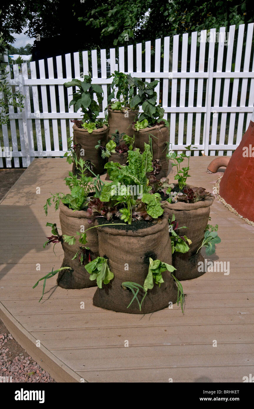 A small urban garden with vegetables grown in containers Stock Photo ...