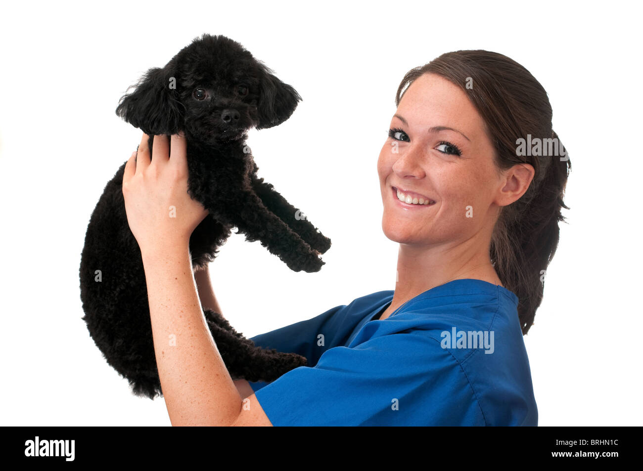 Veterinary assistant holding pet poodle isolated on white background. - Stock Image