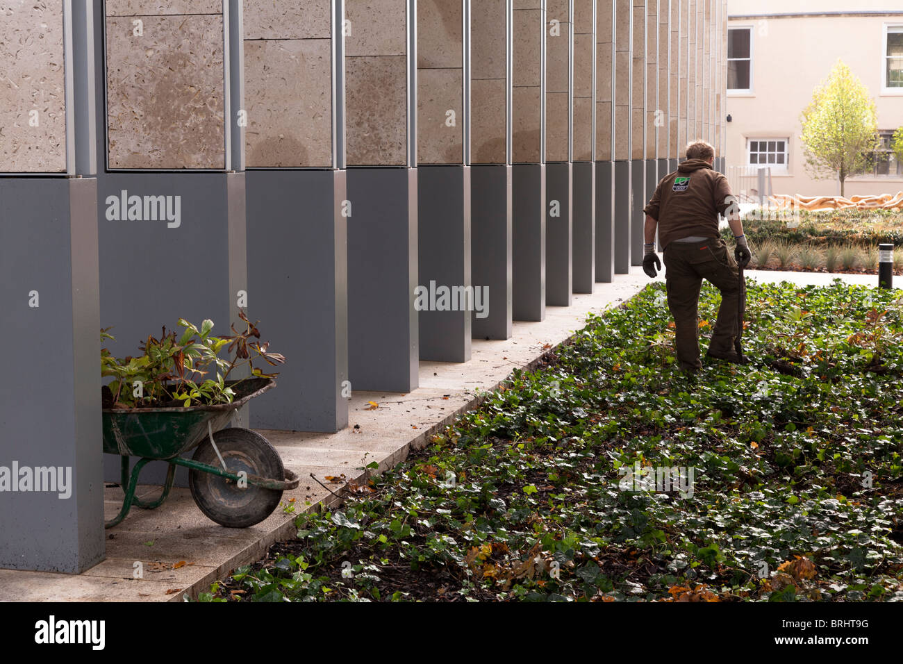 Gardiner and wheelbarrow working on commercial building - Stock Image