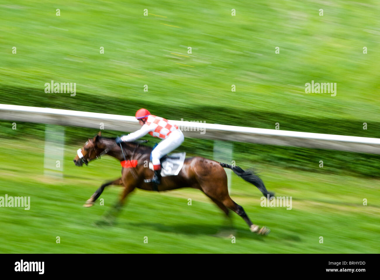 jockey on horse sprinting for victory at a horse race - Stock Image