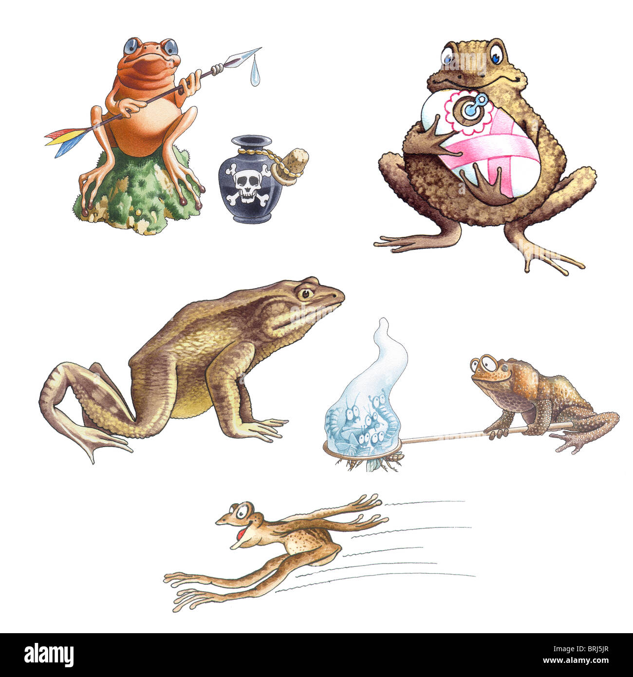 Frogs_2 - Stock Image