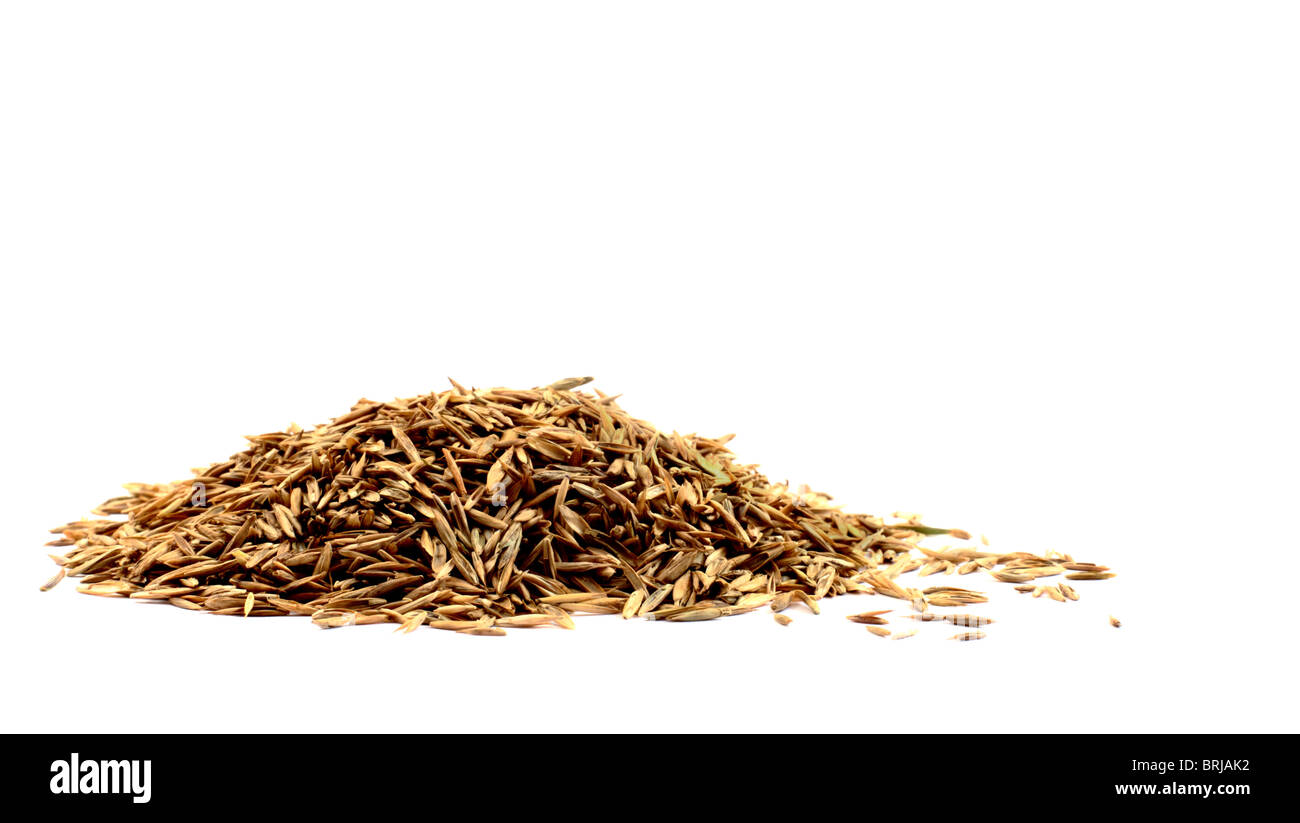 A pile of grass seed on a white background - Stock Image