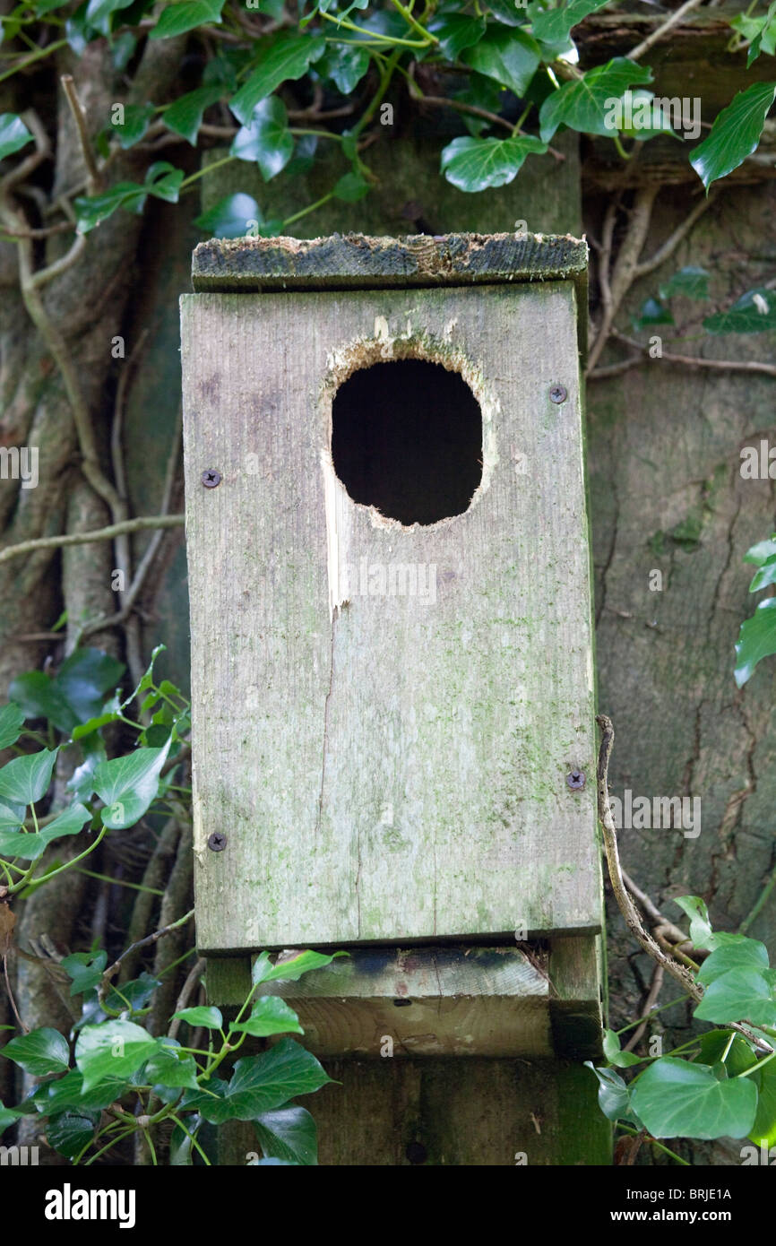 how to build a grey squirrel nesting box